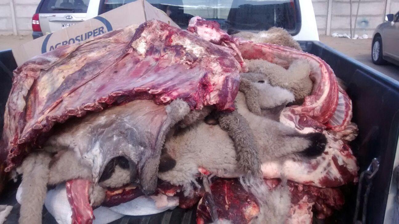 Carabineros Decomisa Carne Comercializada Clandestinamente en Talca