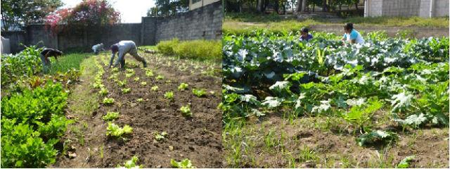 27 Agricultores del Maule fueron beneficiados con recursos para la recuperación de suelos