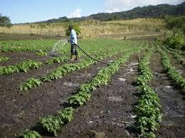 Agricultores preocupados por situación de sequía en el Maule