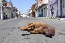 Condenan a Hombre que Disparó a un Perro Provocándole la Muerte