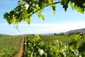 Aumentan Exportaciones de Viñas Maulinas a China
