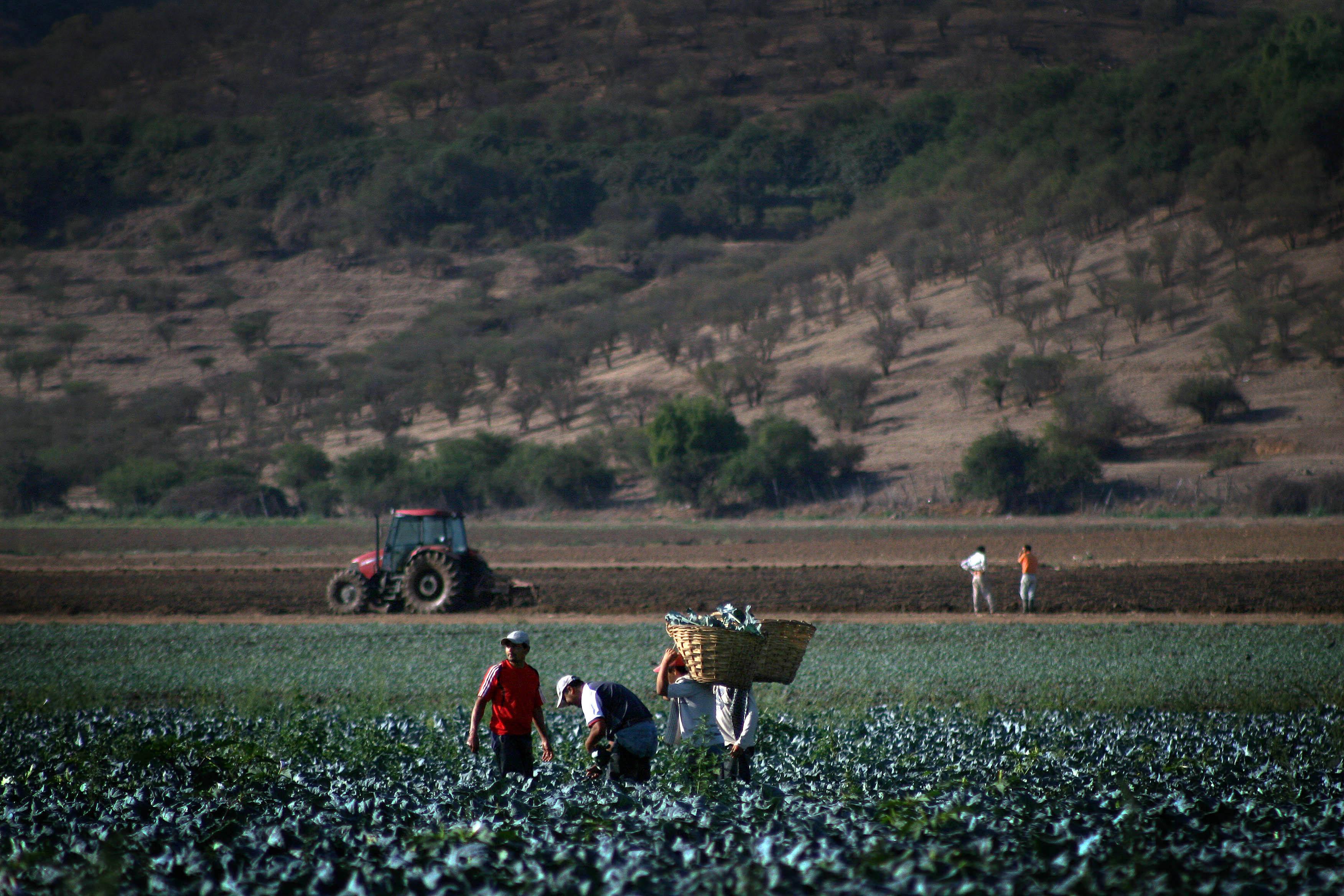 Inspección del Trabajo Fiscaliza al Sector Agricola en Talca