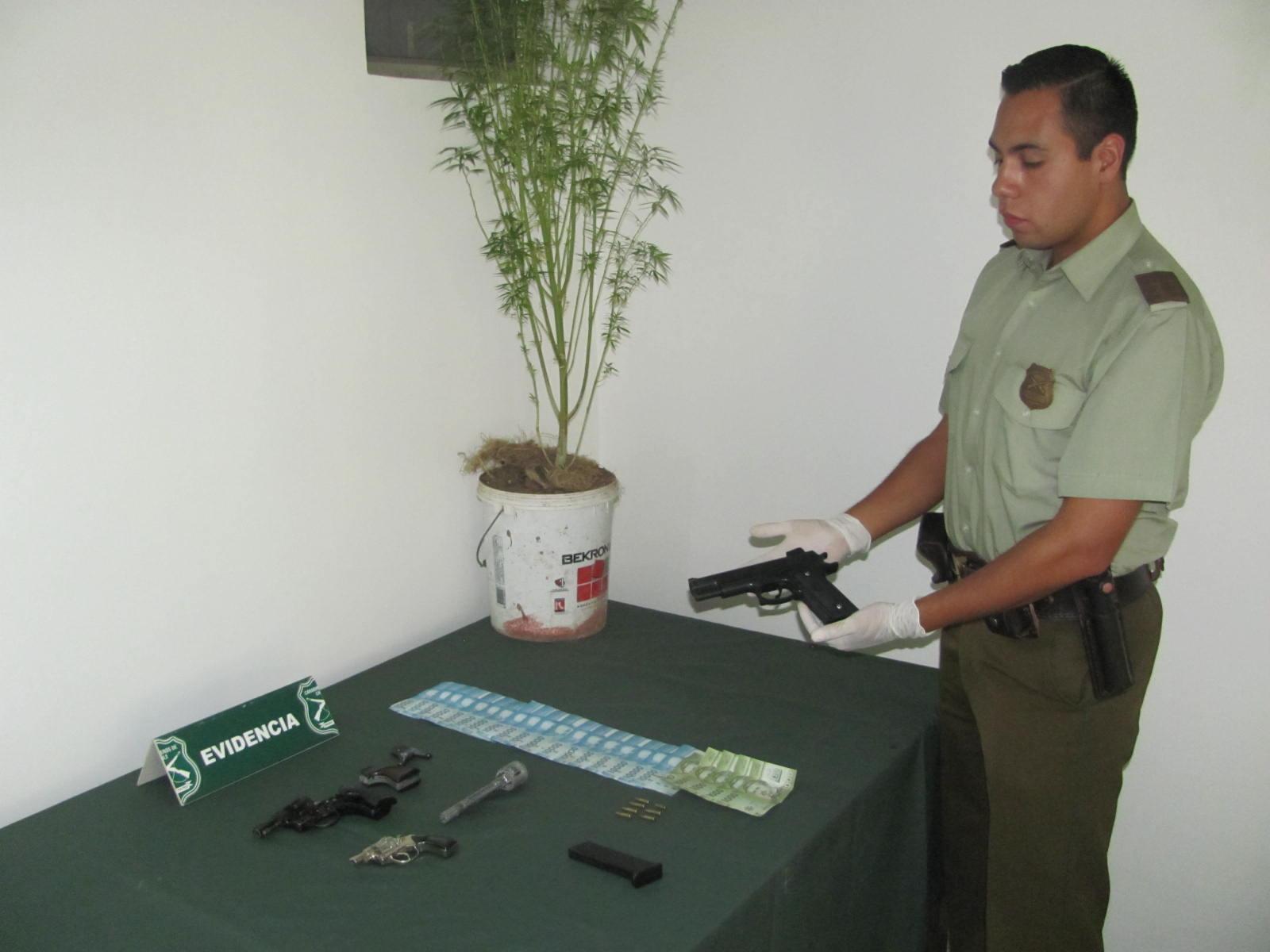 Detenidos por Robo Mantenían Plantas de Marihuana en Talca