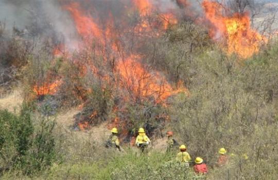 Graves Pérdidas Han Dejado Los Incendios Forestales en la Región