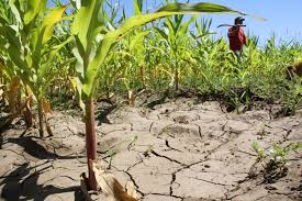 Sequía asola la región del Maule