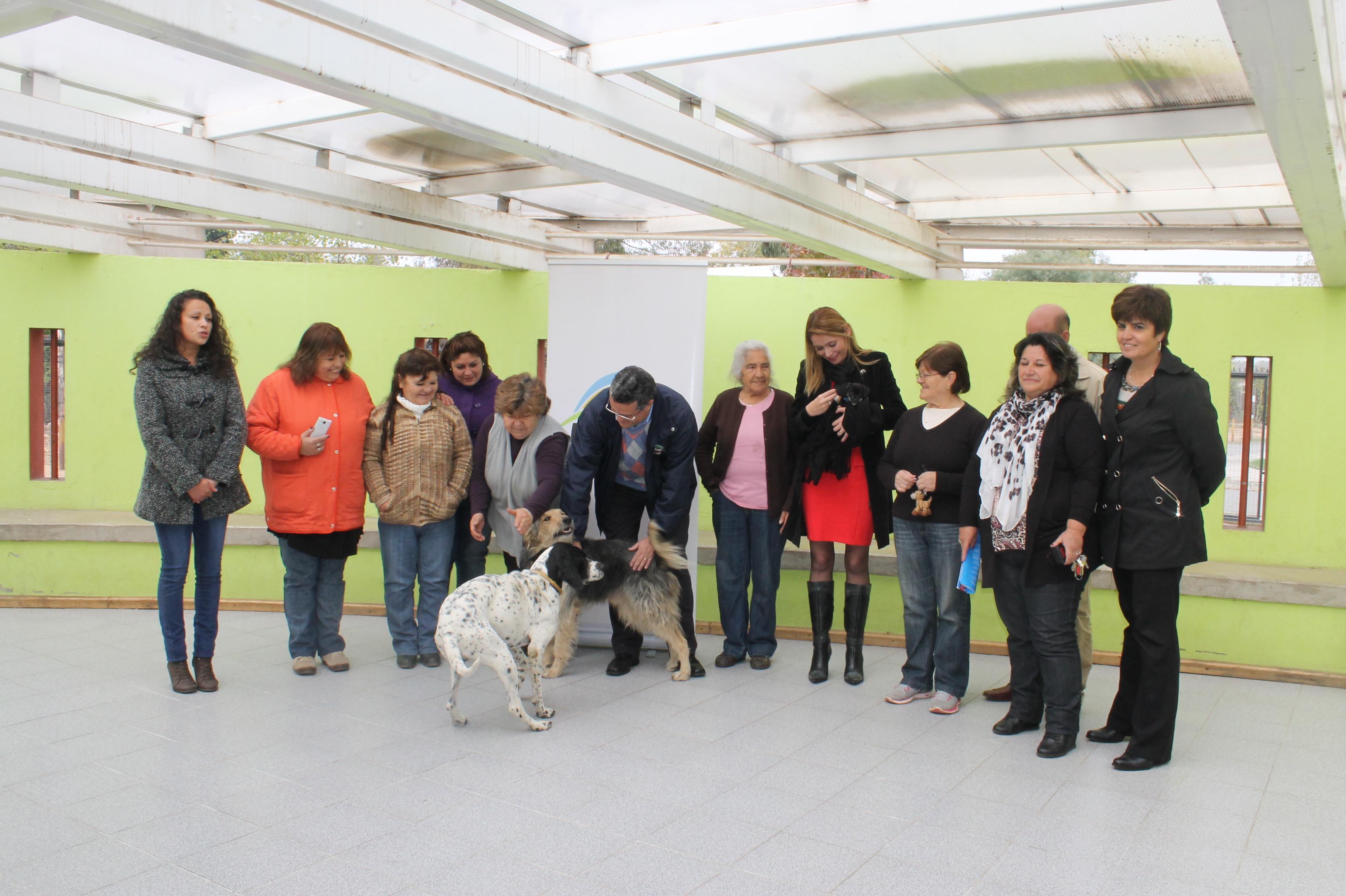 En Linares lanzan campaña de esterilización de mascotas de compañía