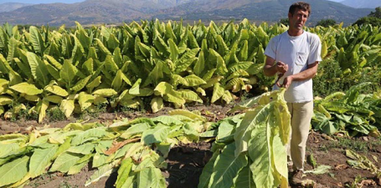Diputado Álvarez-Salamanca se reúne con agricultores Tabacaleros por eventual cierre de empresa