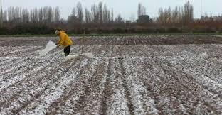Riesgo de heladas y los efectos en la agricultura