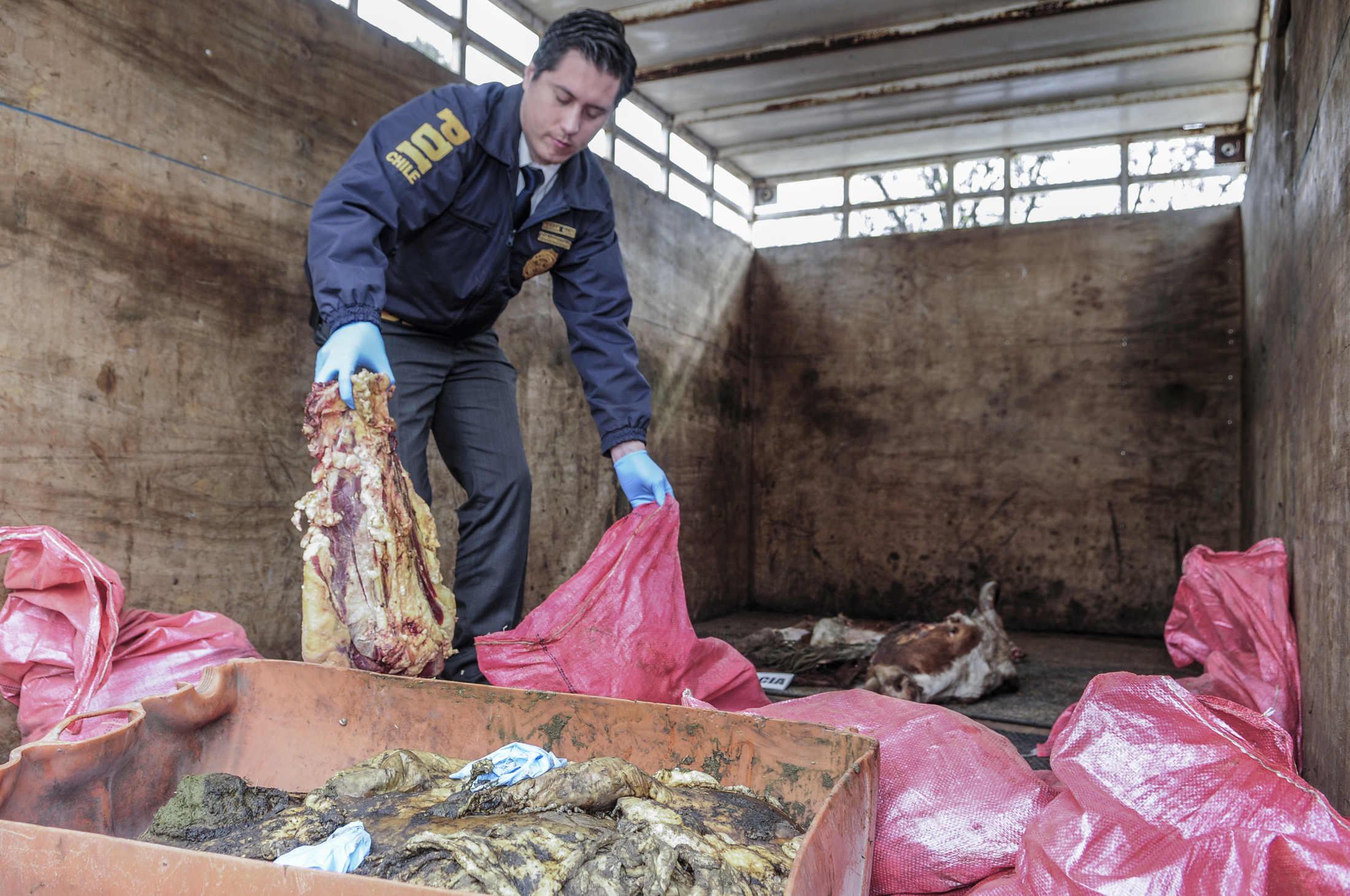 Advierten de los síntomas de consumir carne faenada ilegalmente