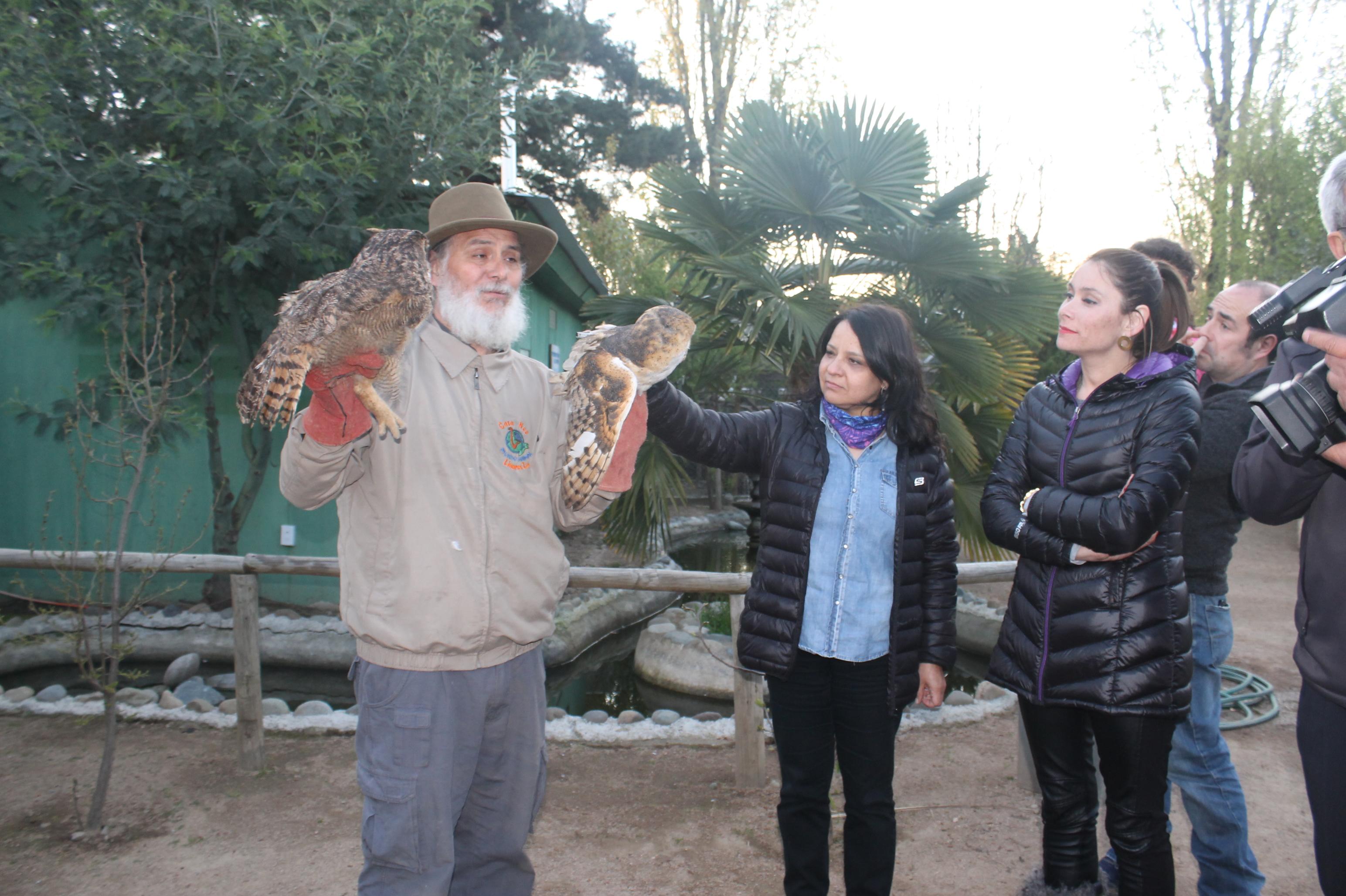 Cuatro aves rapaces rehabilitadas volvieron a la vida silvestre