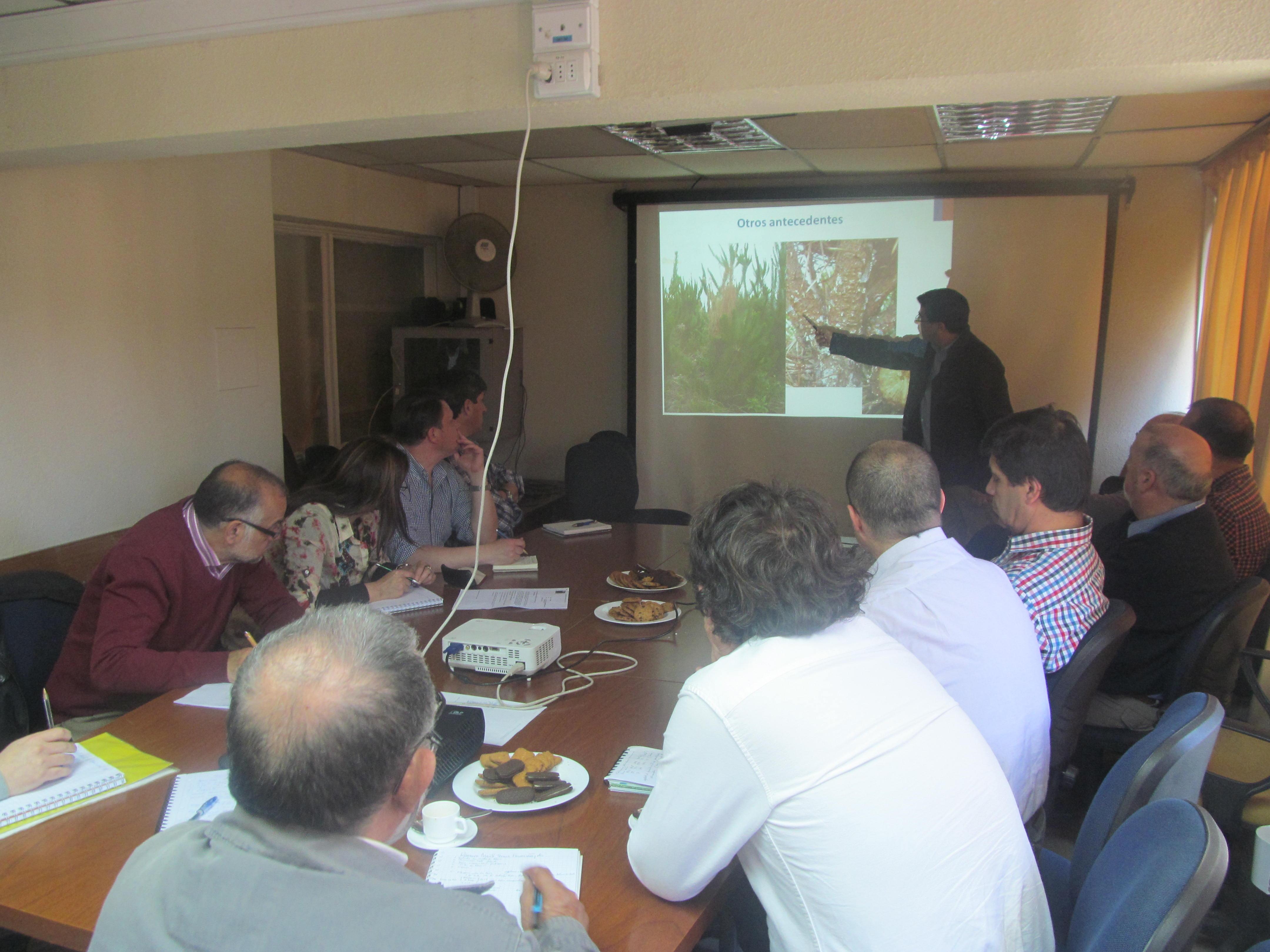 Vigilancia permanente realiza el sag a hongo que ataca las producciones forestales