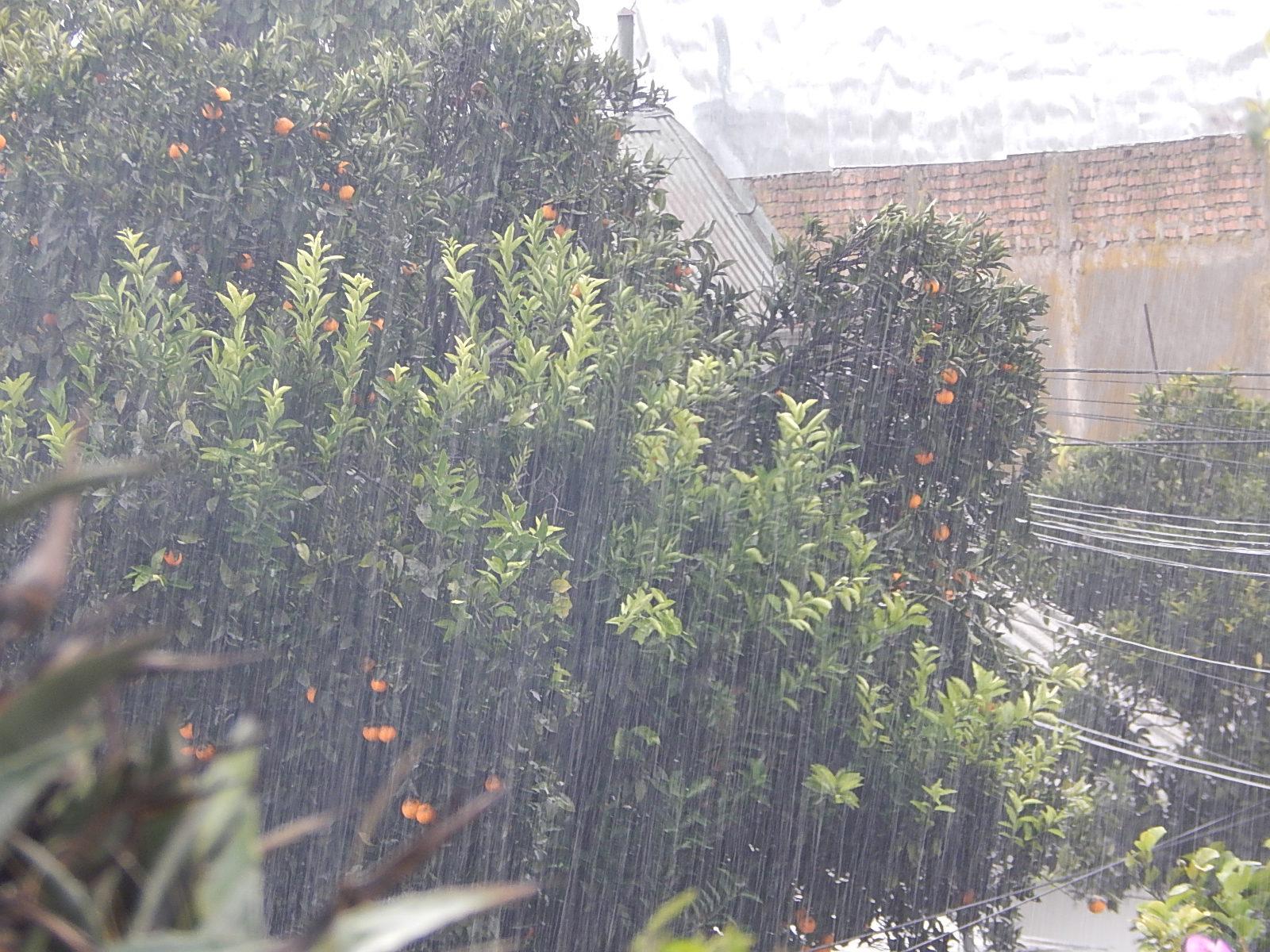 Escasas lluvias se pronostican para este año según experto en el Maule