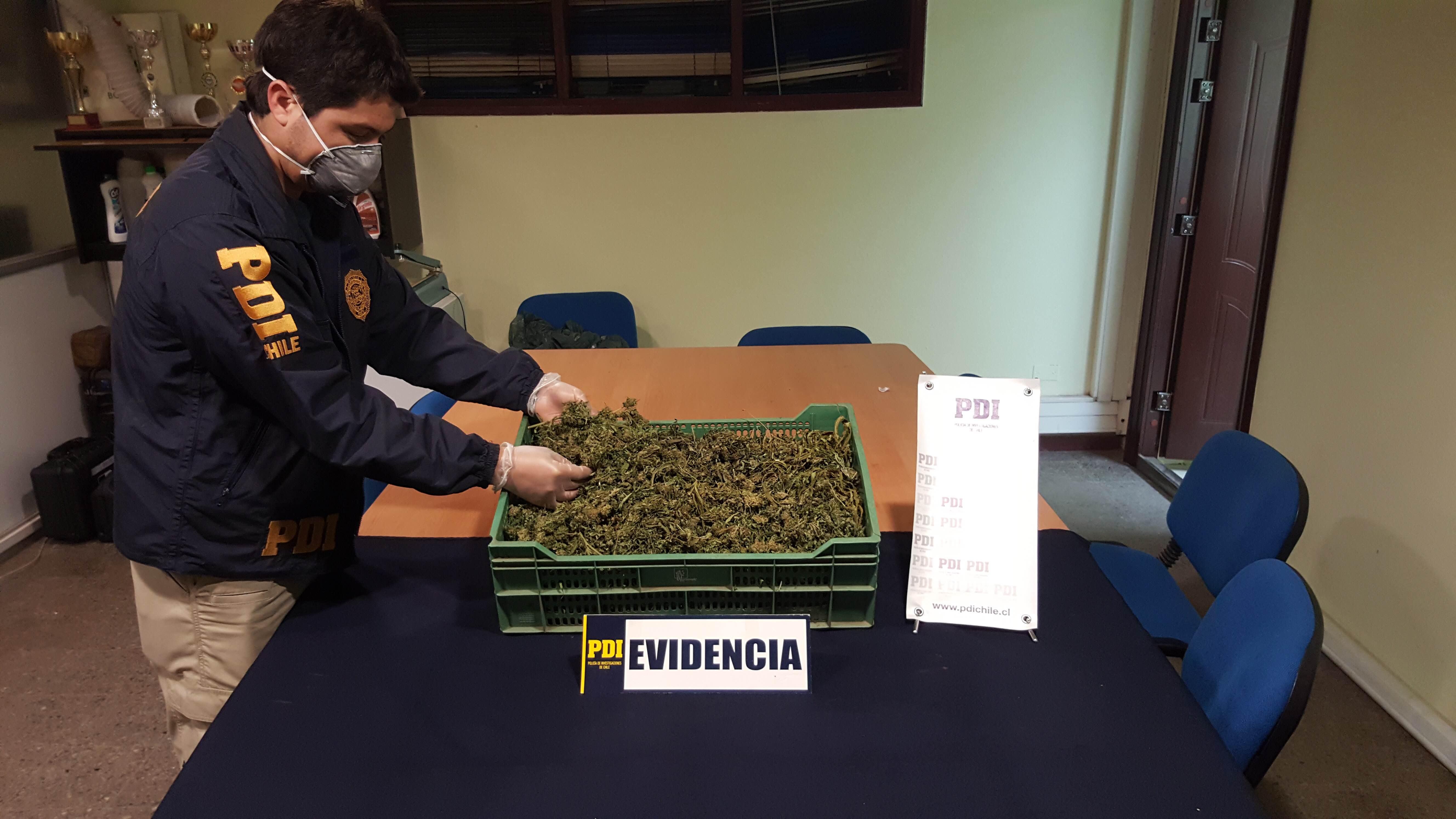 PDI incautó más de un kilo de cannabis tras control en terminal de buses