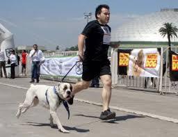 Regimiento de Talca desarrollará corrida con mascotas