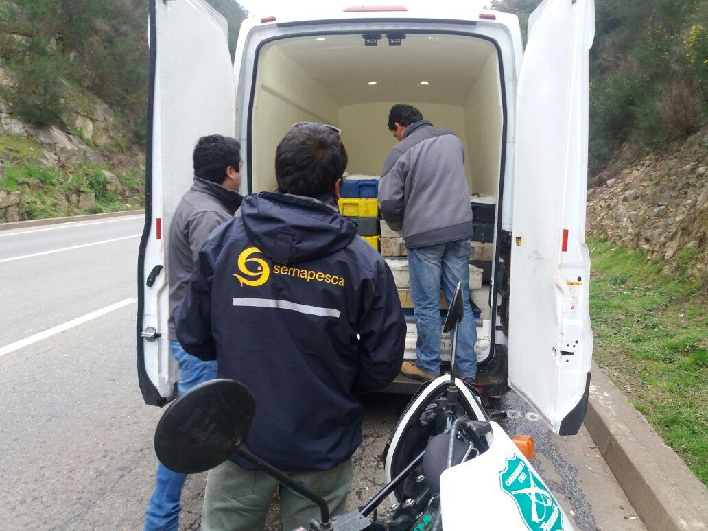 Sernapesca Maule y Carabineros incautan 3 toneladas de  merluza ilegal en Constitución a días de la veda