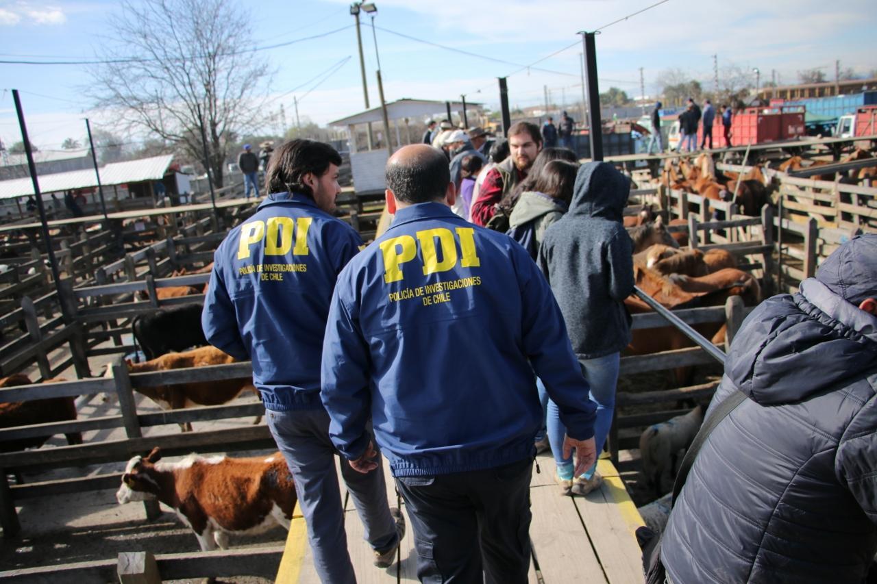 PDIl intensifica fiscalizaciones a ferias de animales previo a fiestas patrias