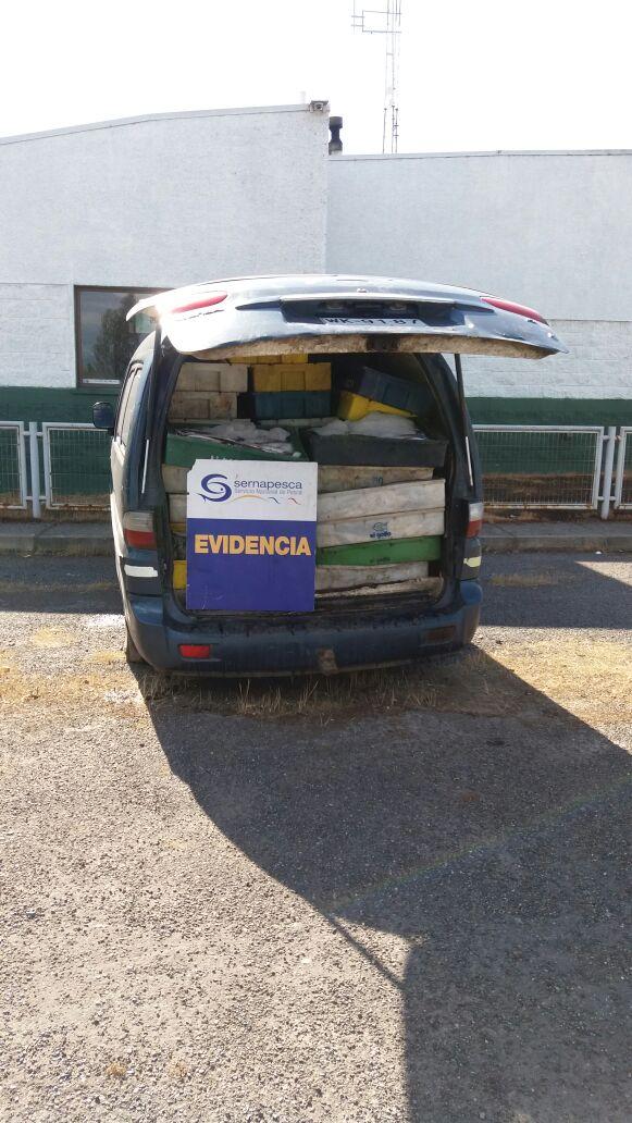 Sernapesca incauta alrededor de 2 toneladas de merluza en Curicó