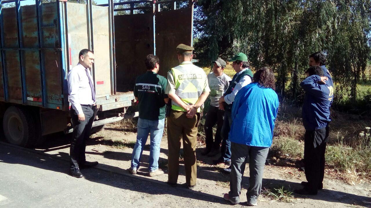 DETENIDOS Y MULTAS DEJA INTENSA FISCALIZACIÓN  DE COMISIÓN DE ABIGEATO EN EL MAULE