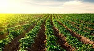 1.500 Millones para la agricultura en el Maule