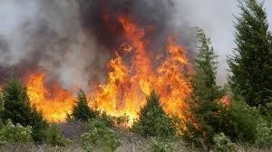Onemi : 6.162 damnificados por los incendios forestales