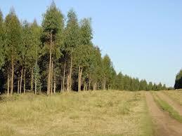 Conaf realizó evaluaciones en los recursos forestales afectados por los incendios