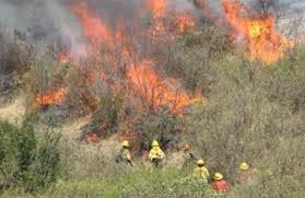 Conaf trabaja en estrategia regional para prevenir incendios forestales