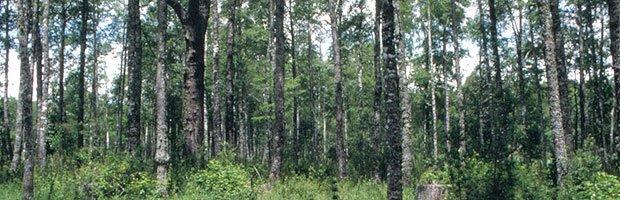 Conaf efectúa alianza público-privada para evitar incendios forestales