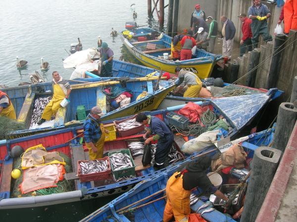 Sernapesca llama a actualizar información en registro pesquero artesanal