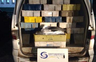 Sernapesca incautó 2,4 toneladas de pesca ilegal
