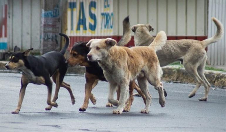 Más de 300 perros y gatos andan a la deriva en calles del país