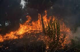 Aumento de 629 incendios en la última década en el Maule