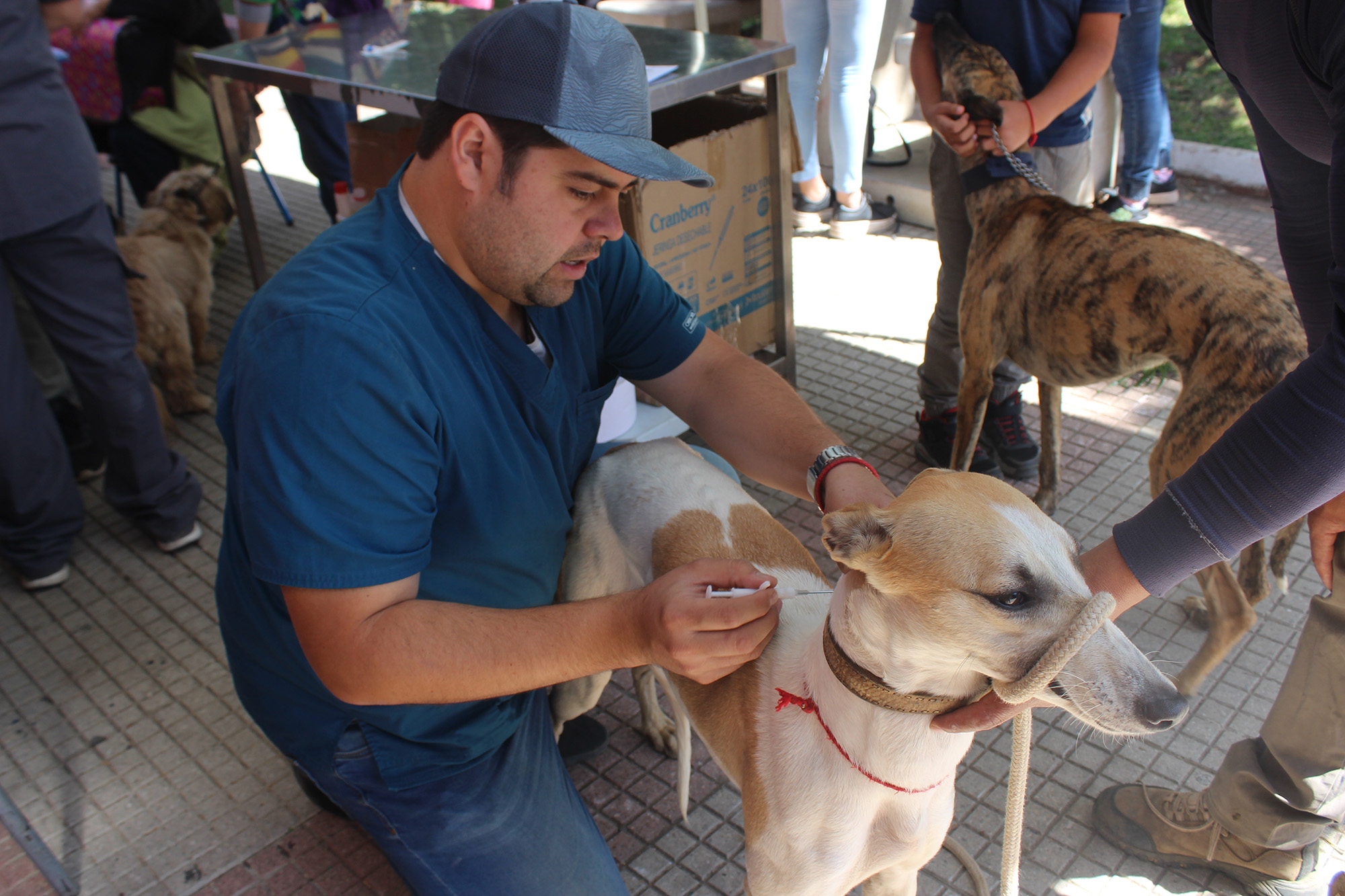 Cinco mil atenciones a perros y gatos ha realizado la veterinaria de Colbún