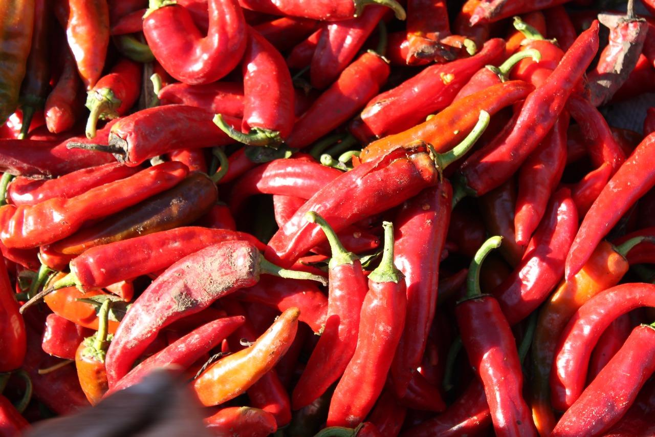 Expertos destacan los alimentos patrimoniales de Chile en el Día Internacional de la diversidad biológica