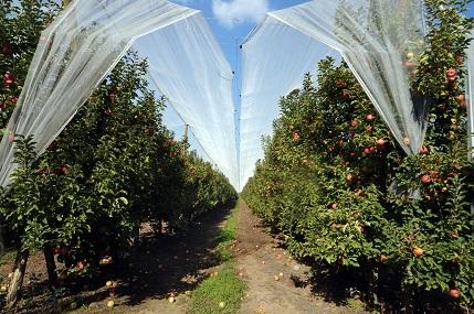 Positivo balance de capacitación virtual sobre cambio climático realizó Agricultura Maule