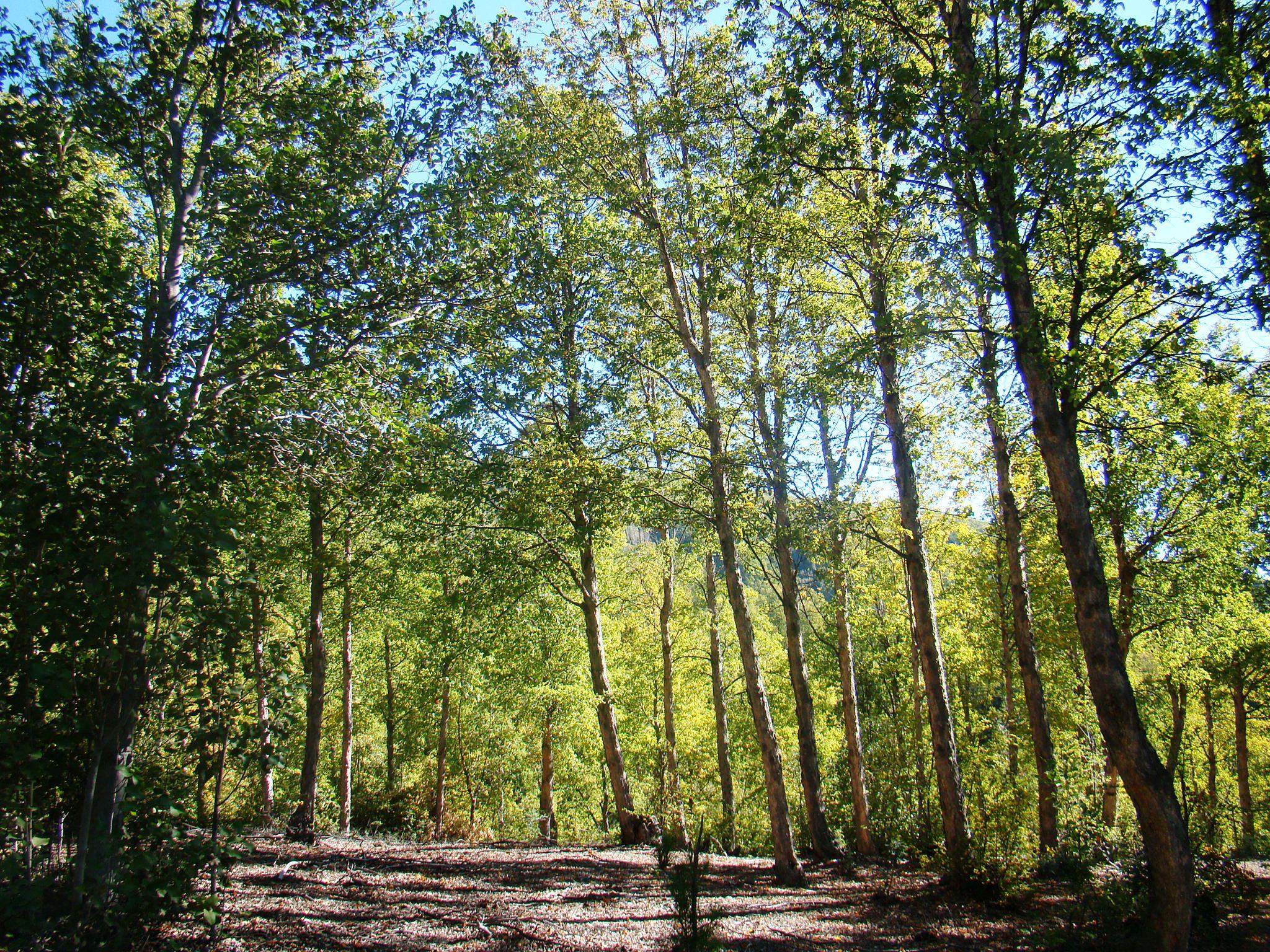 CONAF hace llamado a postular ley de Bosque Nativo