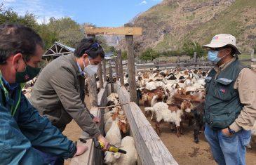 Resaltan importancia de proteger sanidad animal durante veranadas