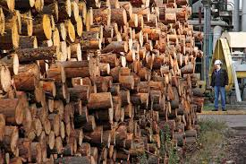ProChile impulsa la recuperación de exportaciones forestales en Enexpro