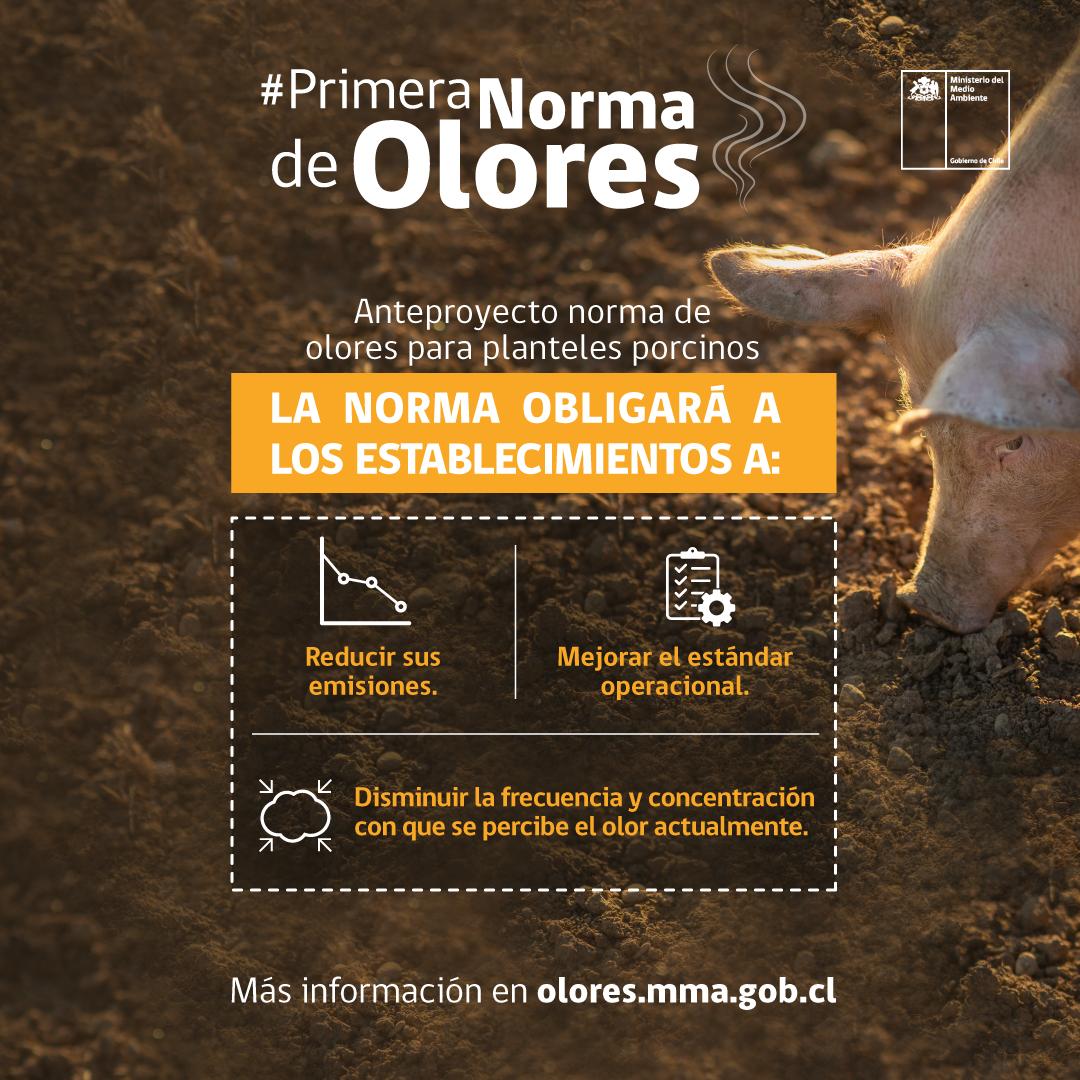 Llaman a participar en consulta ciudadana por primera norma ambiental de olores para el sector porcino