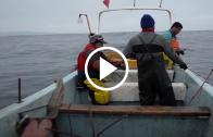 SERNAPESCA crea plataforma web caletaenlinea.cl, para venta y adquisición de productos del mar