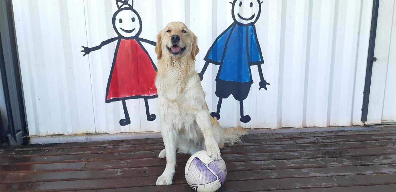 Maule: Terapia Canina para niñas y niños de Talca