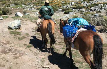 En su última etapa se encuentra temporada de veranadas en provincia de Linares