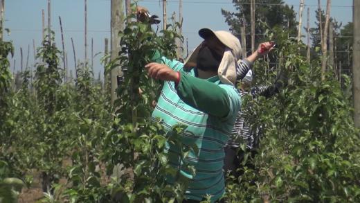 Seremi de salud inicio las fiscalizaciones en empresas agrícolas en el Maule