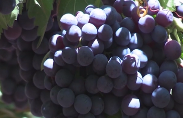 Gobierno entregó recursos a productores agrícolas de la comuna de Curepto
