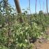 El depto. De migraciones de la PDI de Talca identificó 22 extranjeros trabajando de forma irregular en sector agrícola de Pelarco